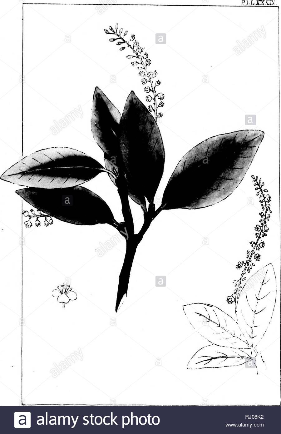 Jardin Botanique Élégant R E Ms Stock S & R E Ms Stock Page 3 Alamy