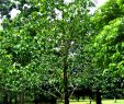 Jardin Botanique Frais File Botanic Garden Limbe63 Wikimedia Mons