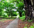 Jardin Botanique Frais File Botanic Garden Limbe86 Wikimedia Mons
