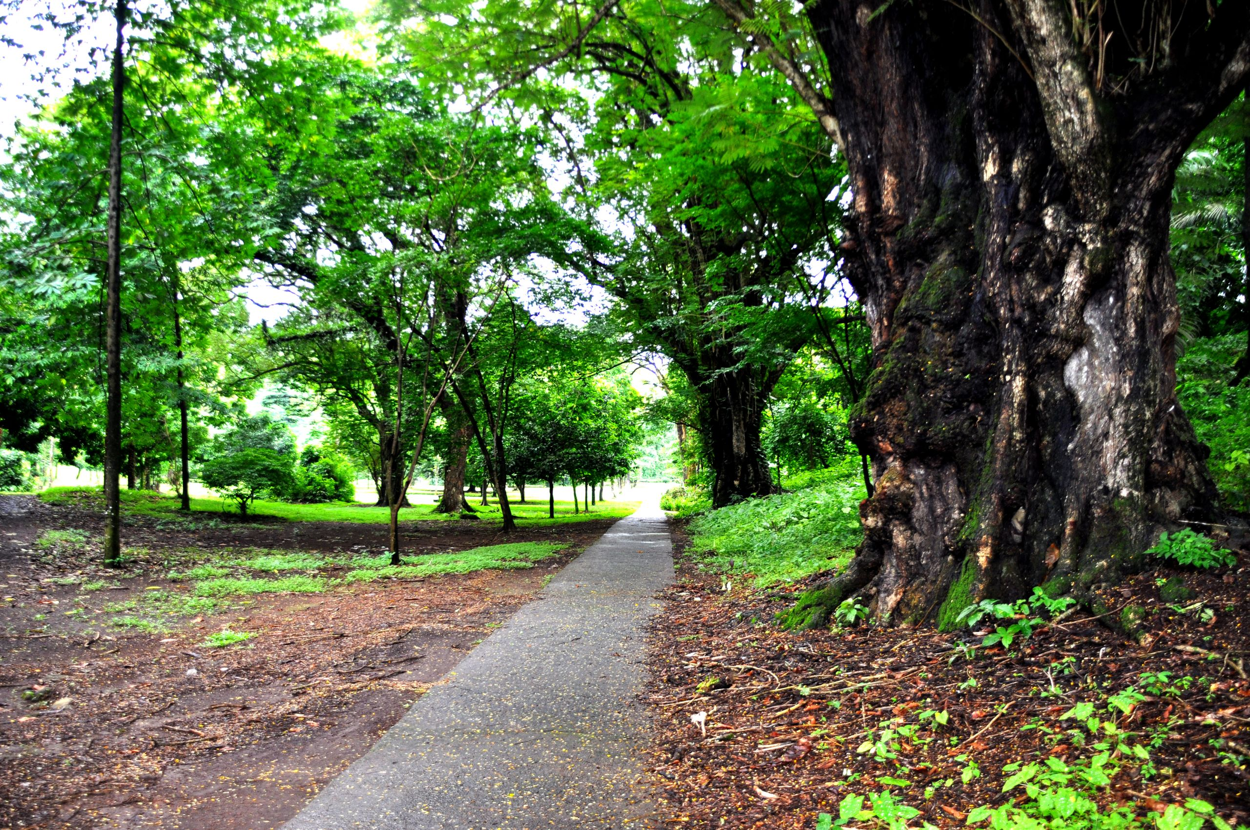 Botanic garden limbe86
