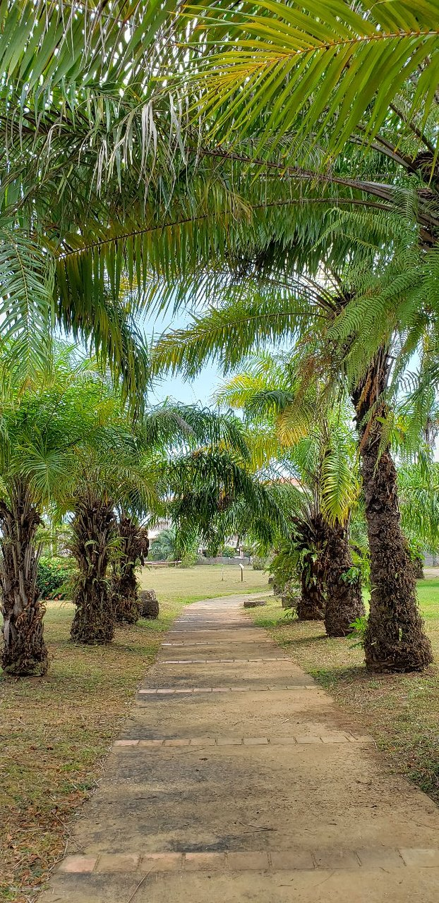 Jardin Botanique Génial Jardin Botanique Cayenne 2020 All You Need to Know