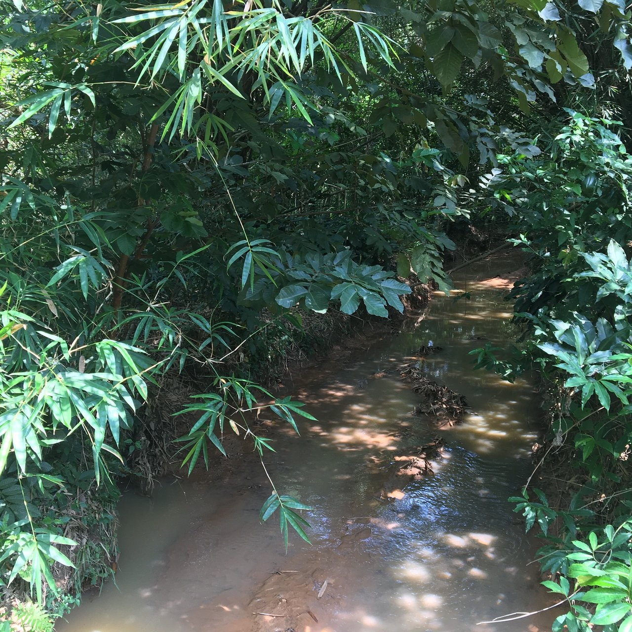 jardin botanique de kisantu