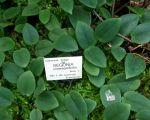 43 Unique Jardin Botanique Nancy