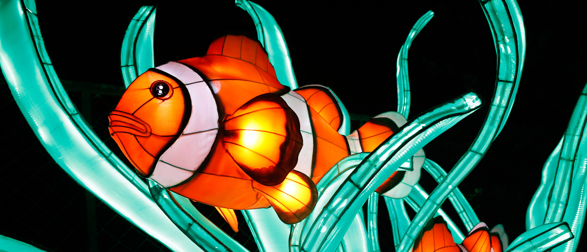 oc an en voie d illumination l exposition lumineuse revient au jardin des plantes 4903