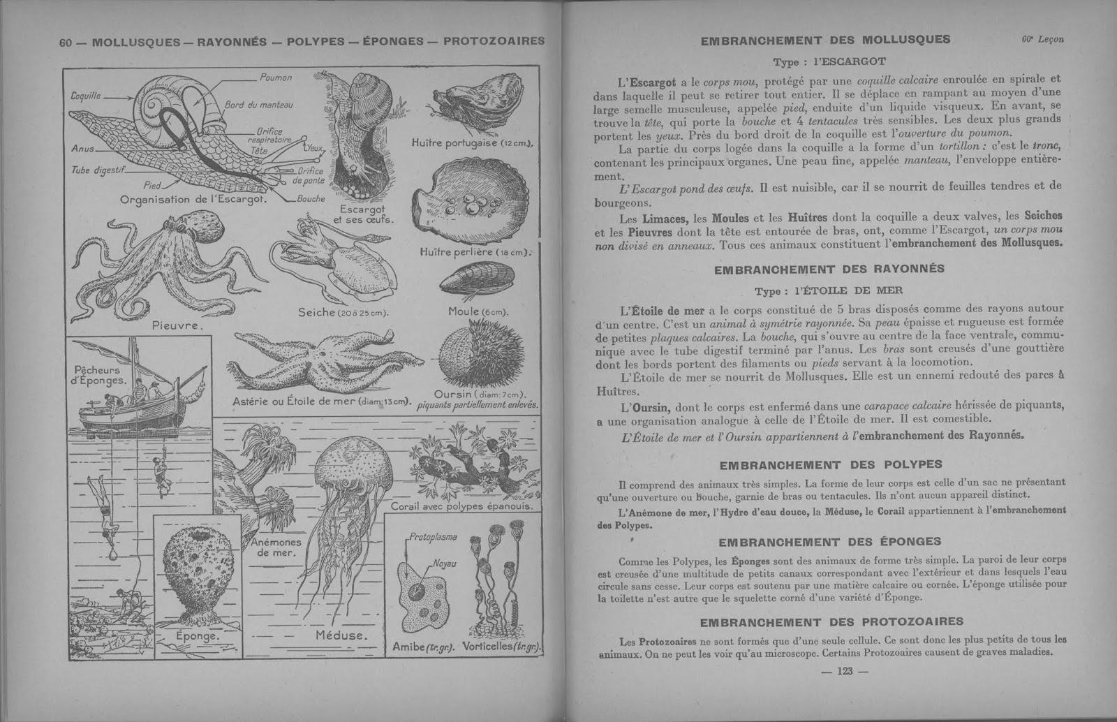 Dirand Carron Les sciences au cours supérieur Leçons de choses CM2 1954 0063