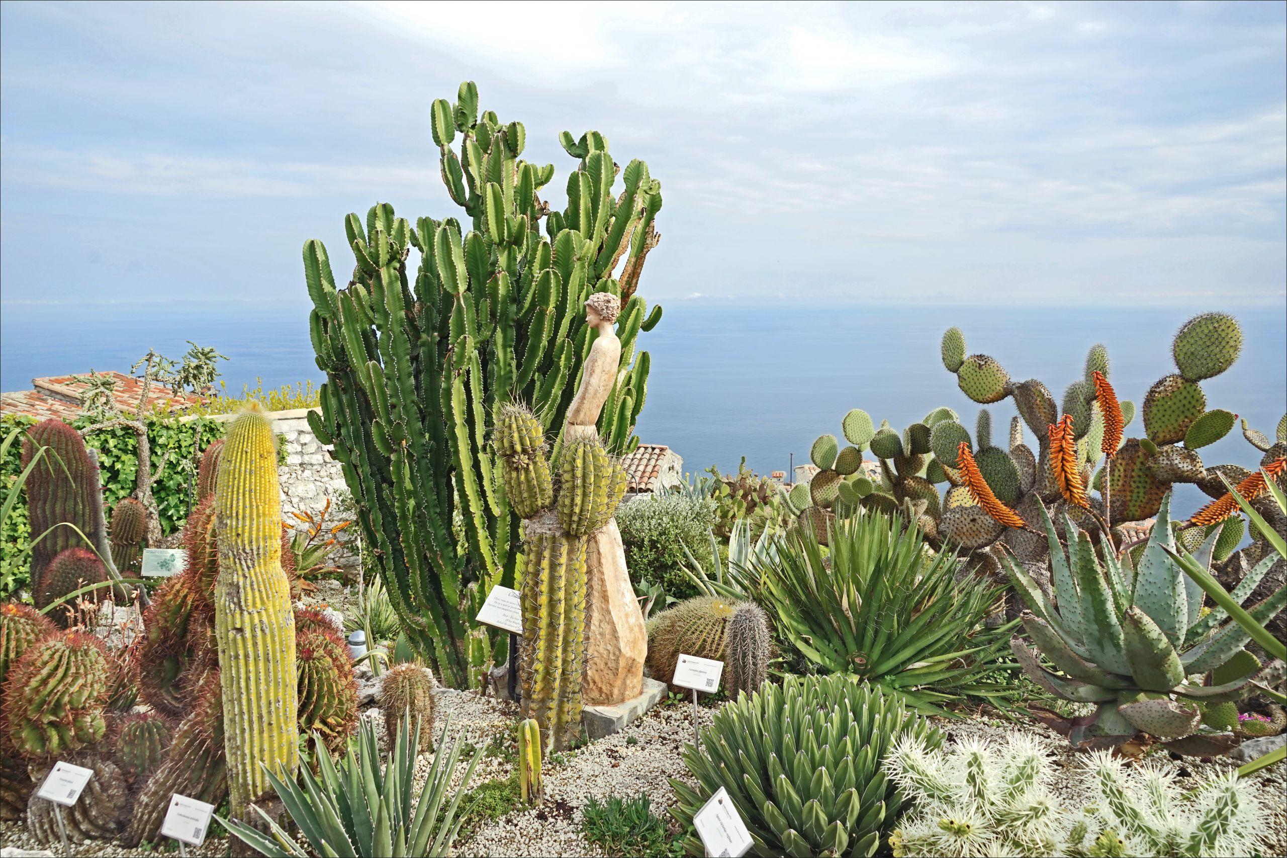 Le jardin exotique d Èze sur la Côte d Azur France %