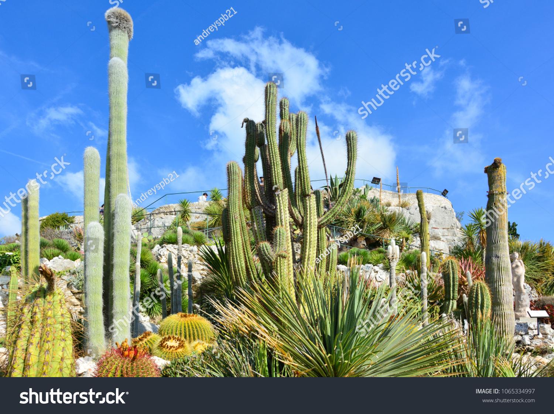 stock photo succulents at jardin botanique d eze eze france