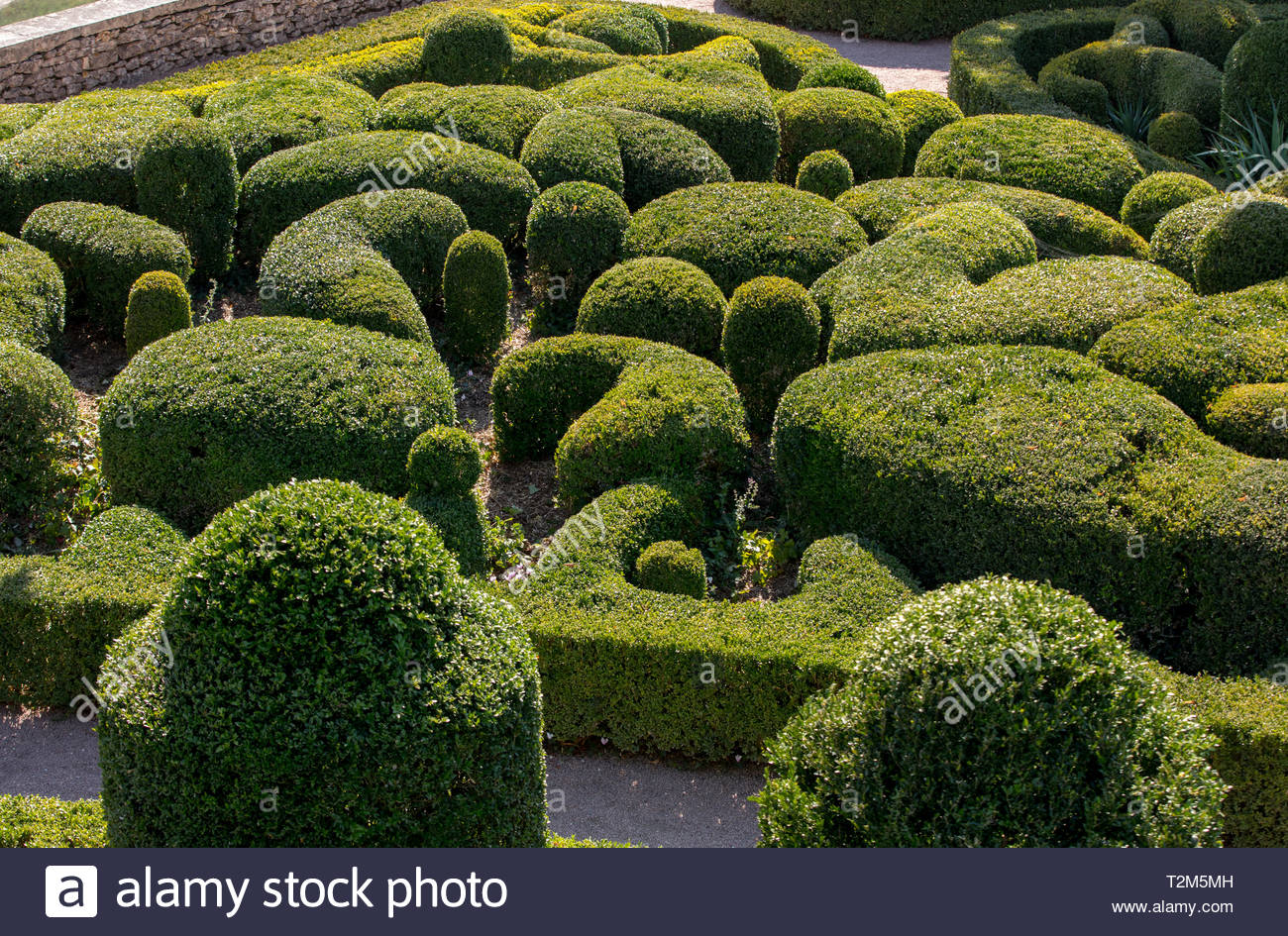 topiary in the gardens of the jardins de marqueyssac in the dordogne region of france T2M5MH