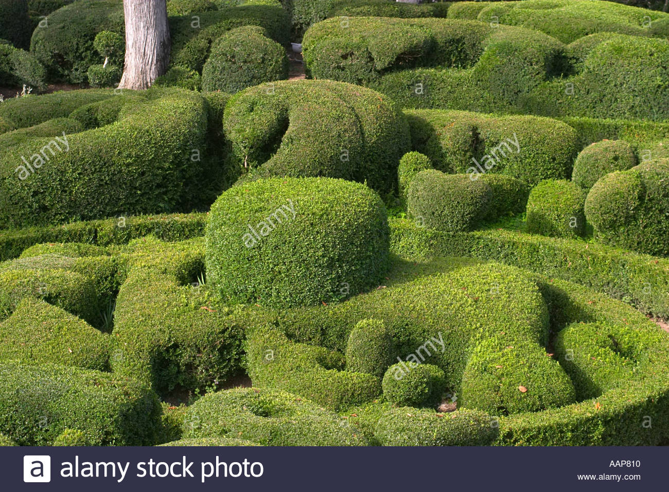 topiary at the chateau de marqueyssac dordogne france AAP810
