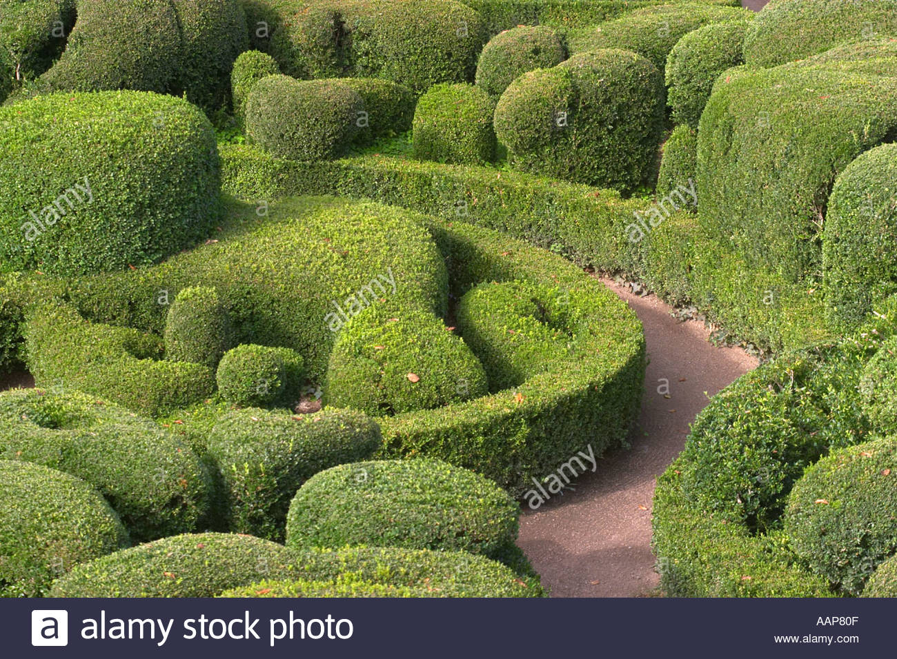 topiary at the chateau de marqueyssac dordogne france AAP80F