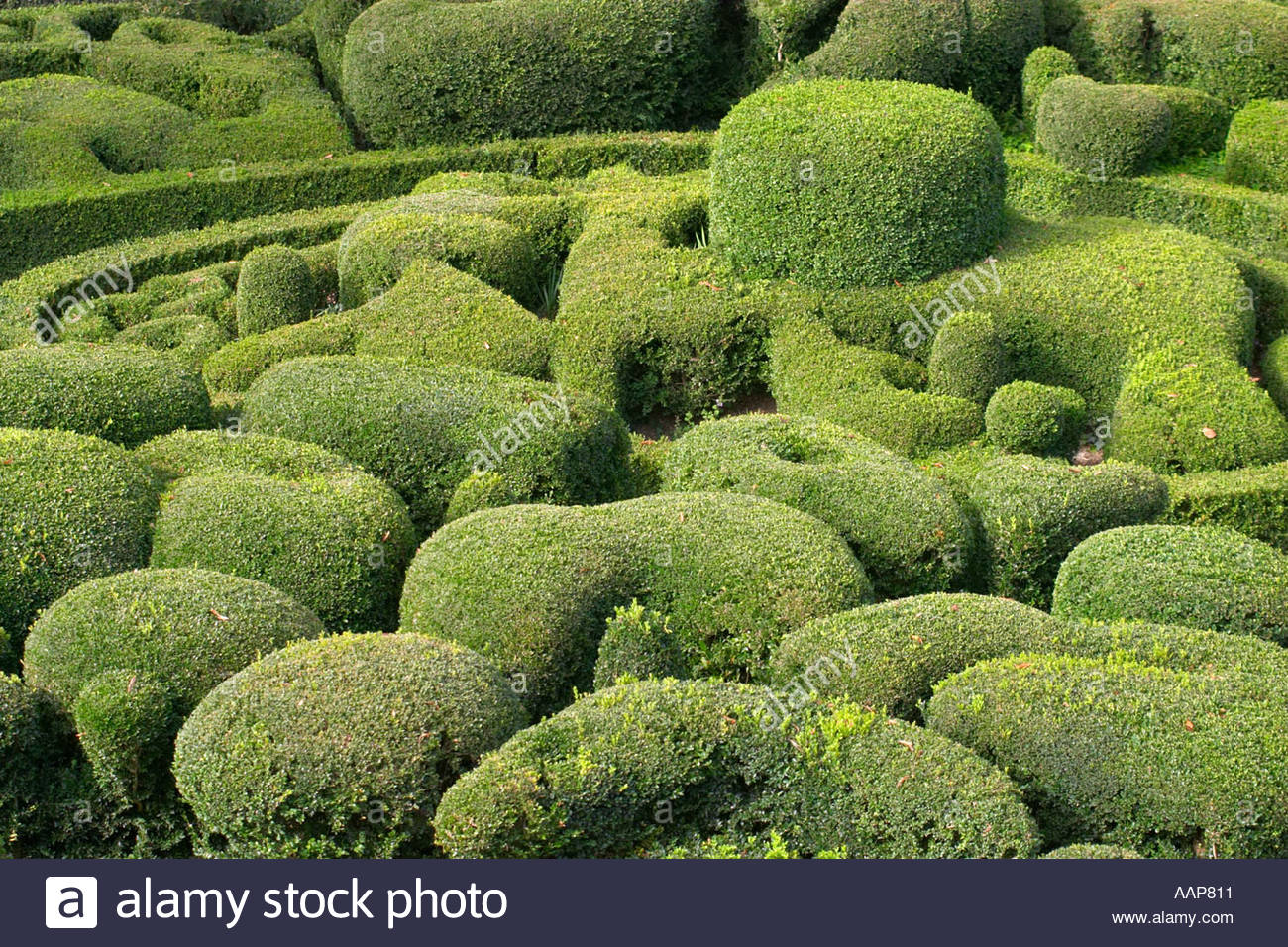 topiary at the chateau de marqueyssac dordogne france AAP811