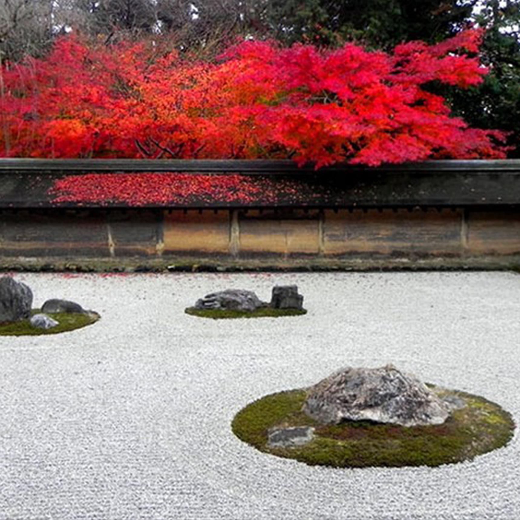 ODryoanji rock garden autumn leaves