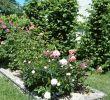 Jardin De Roses Inspirant Bed and Breakfast Le Jardin De Roses Dominique Loreau B&b