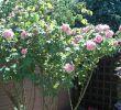 Jardin De Roses Luxe Bed and Breakfast Le Jardin De Roses Dominique Loreau B&b