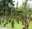Jardin De Roses Unique S Martinique Page 2