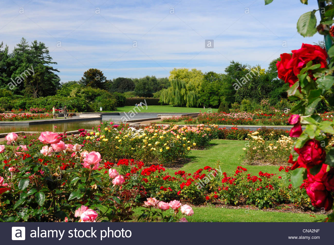 france nord lille jardin des plantes de lille roses and walkers in CNA2NF