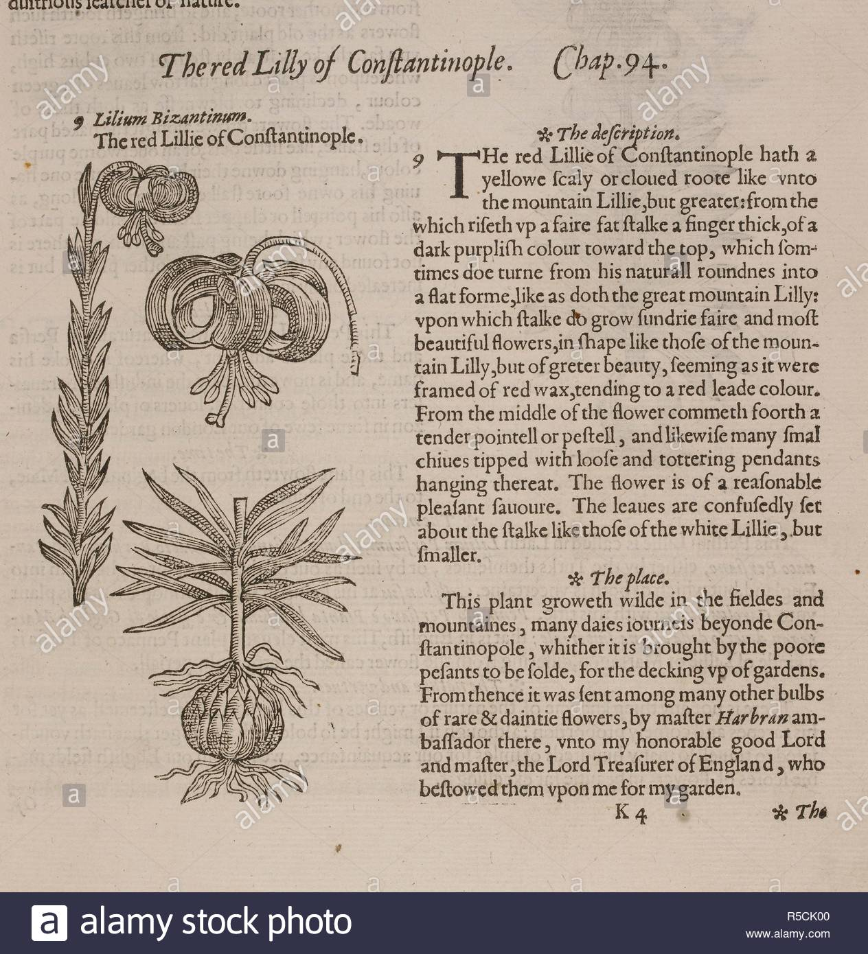 the red lilly of constantinople plate and text the herball or generall historie of plantes london 1597 source 449k4 chapter 94 language english author gerard john R5CK00