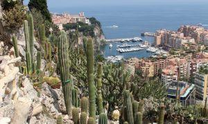 44 Élégant Jardin Exotique Monaco