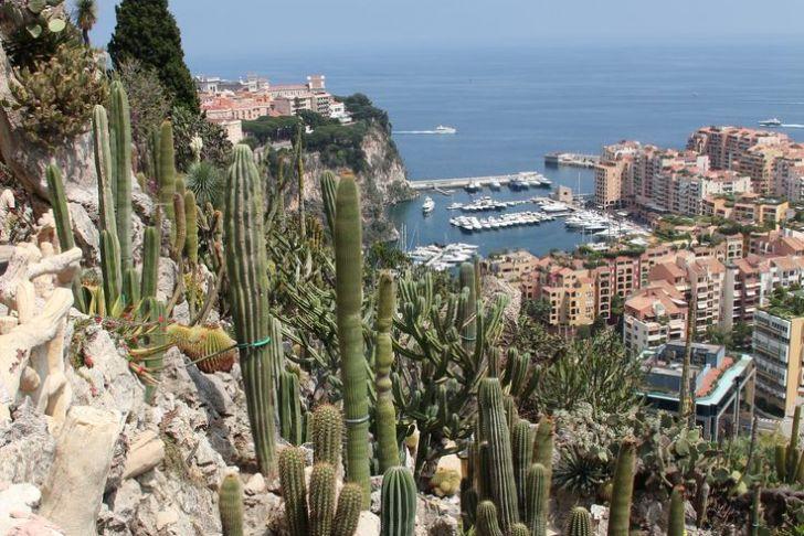Jardin Exotique Monaco Unique 100 [ Jardin Exotique ]