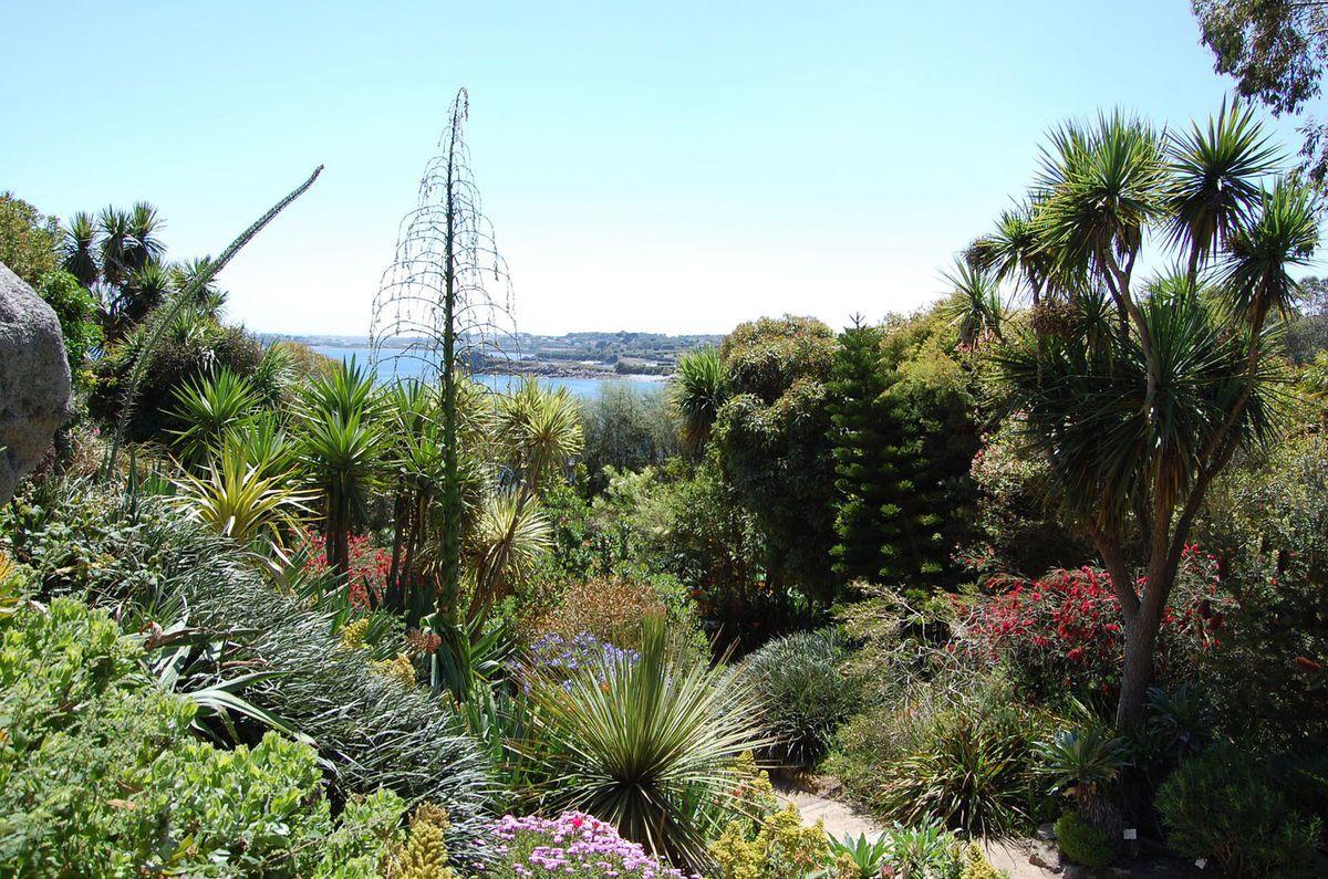ob 91f1bb roskoff jardin exotique 26 JPG
