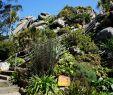 Jardin Exotique Roscoff Luxe Les 58 Meilleures Images De Bretagne
