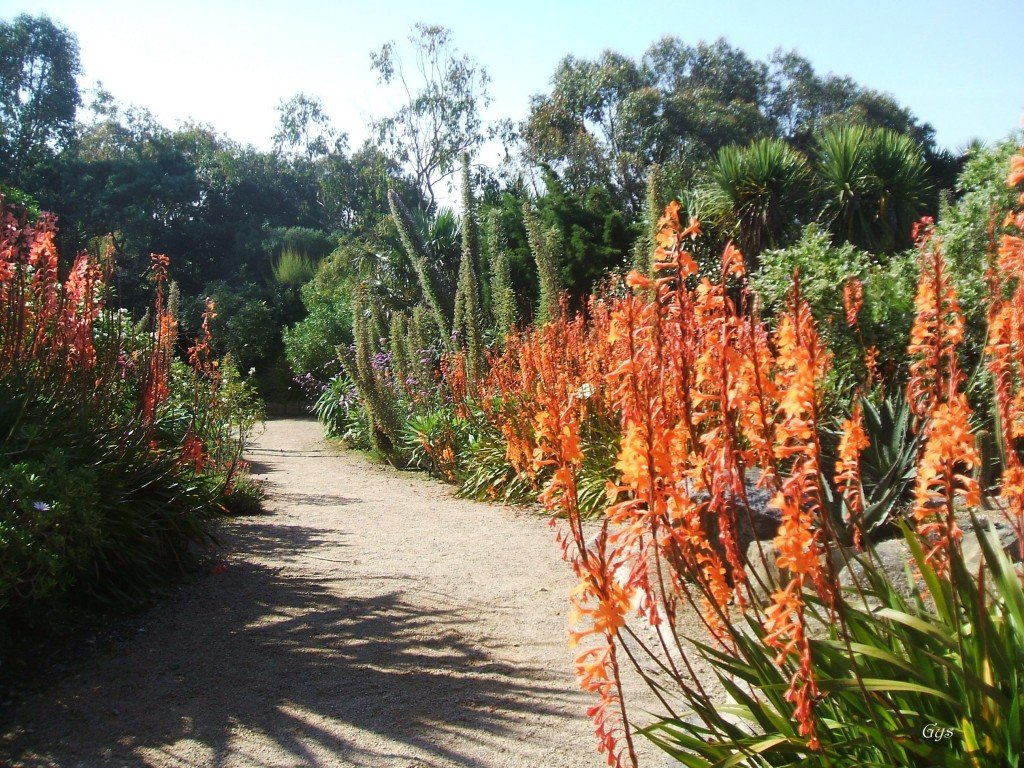 jardin exotique roscoff 1