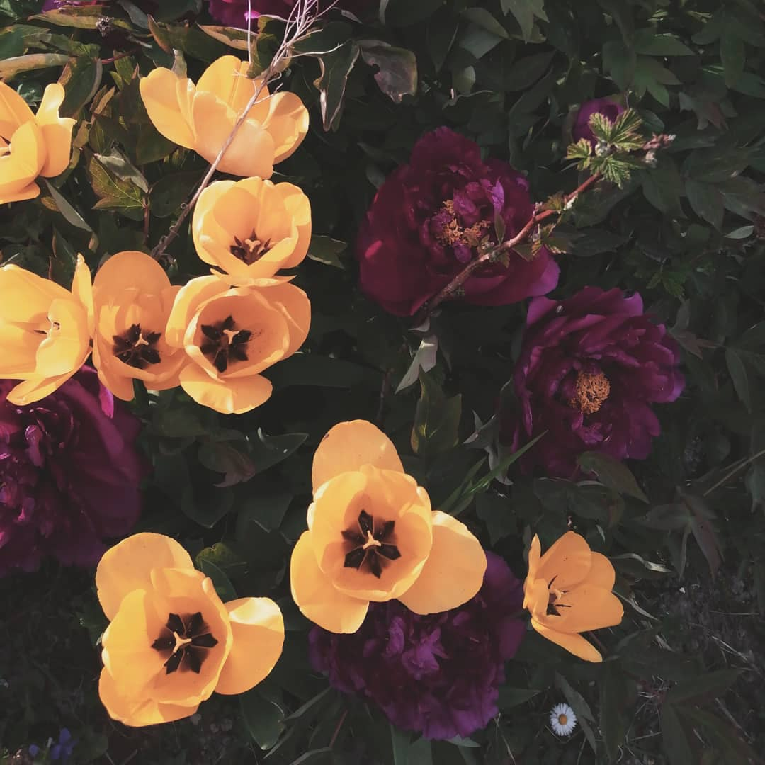Jardin Fleur Génial List Fushia S and Videos Of 42 Charmant Jardin Fleur