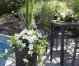 Jardin Fleur Inspirant 19 Tantalizing Plants Indoor Products Ideas