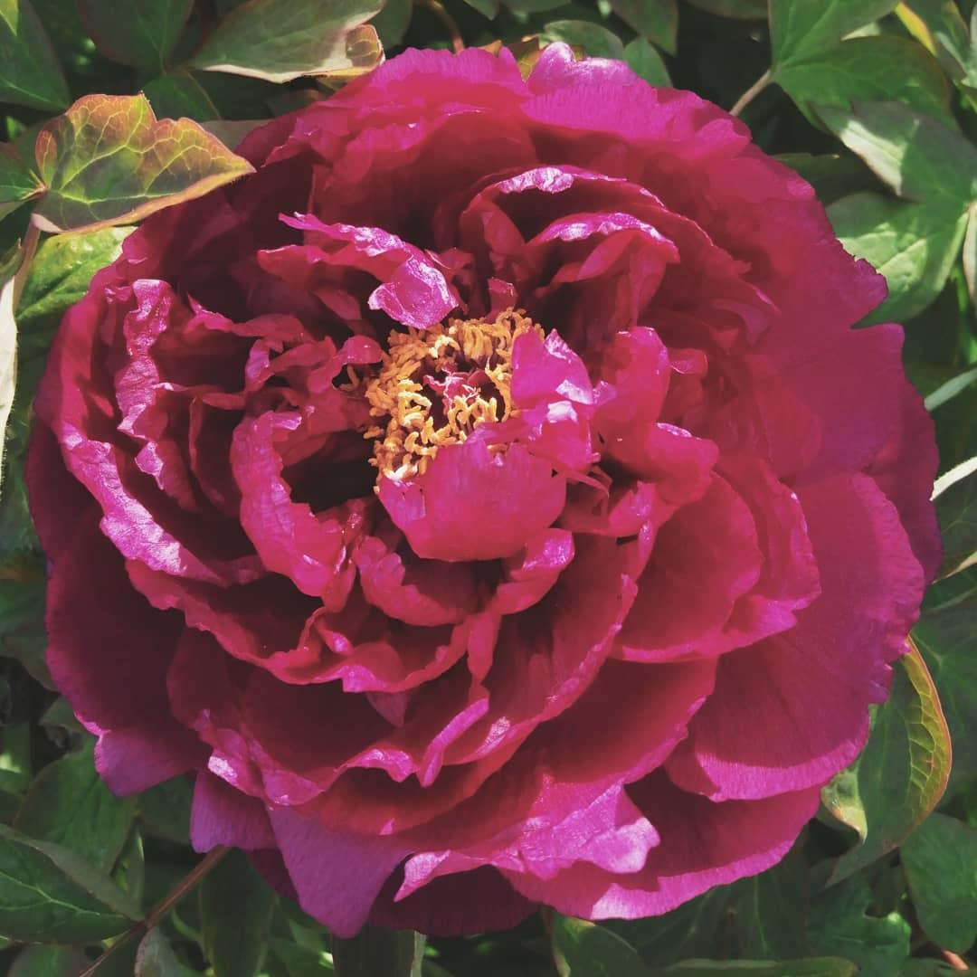 Jardin Fleur Nouveau List Fushia S and Videos Of 42 Charmant Jardin Fleur