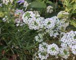 37 Luxe Jardin Fleuri Lyon 5