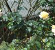 Jardin Fleuri Lyon 5 Unique Bed and Breakfast Le Jardin De Roses Dominique Loreau B&b