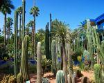 85 Beau Jardin Majorelle Marrakech