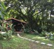 Jardin Martinique Nouveau épinglé Sur Martinique Treehouse