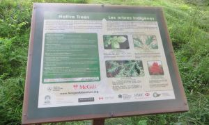20 Inspirant Jardin Naturel