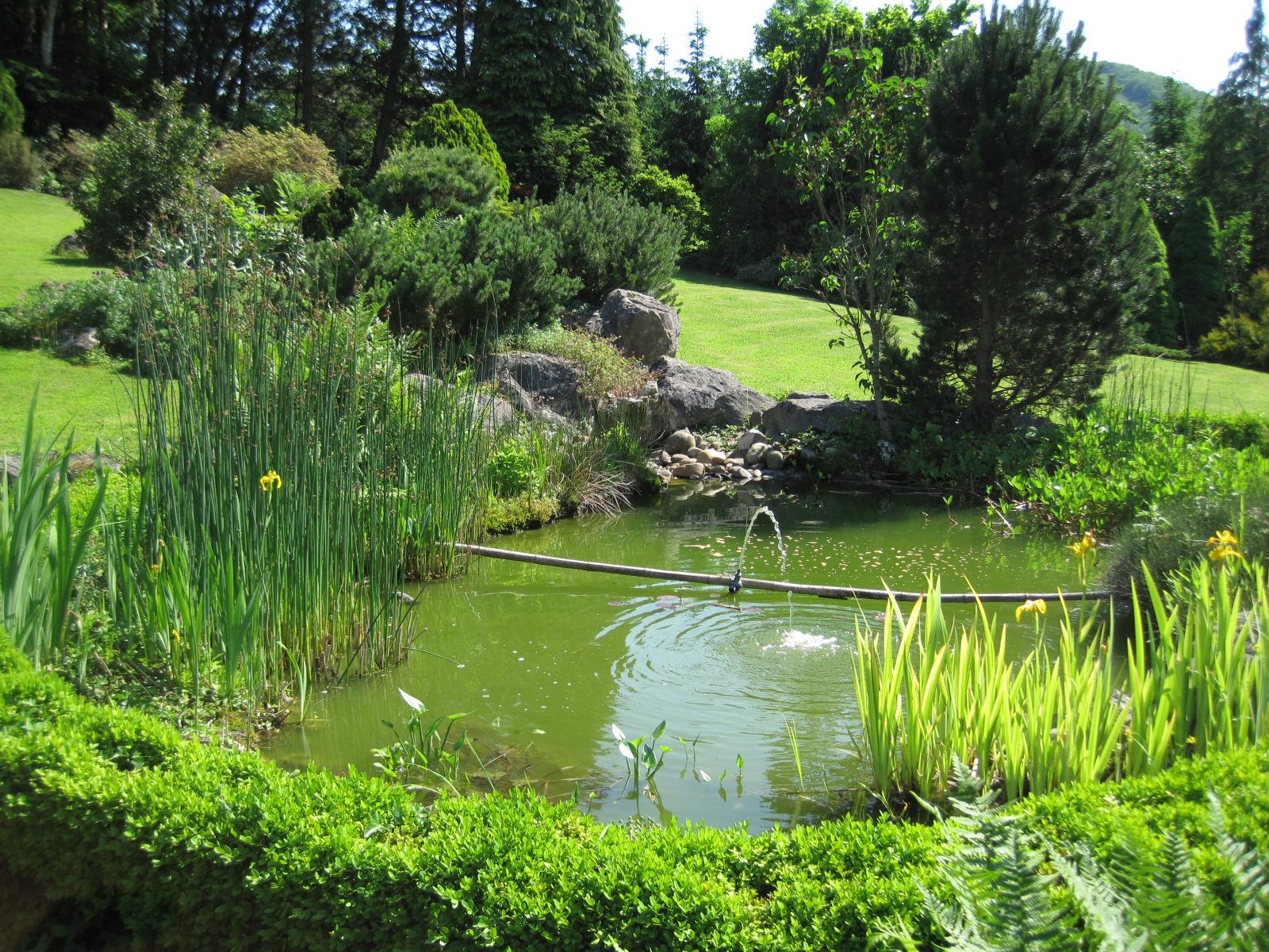 Bassin de jardin 0001