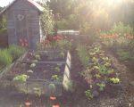 85 Inspirant Jardin soleil