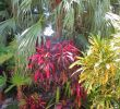 Jardin Tropical Frais Pin by Troy Brumfield On Tropical Gardens