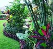 Jardin Tropical Luxe Tropical Garden Landscape Design Tropical Garden Landscape