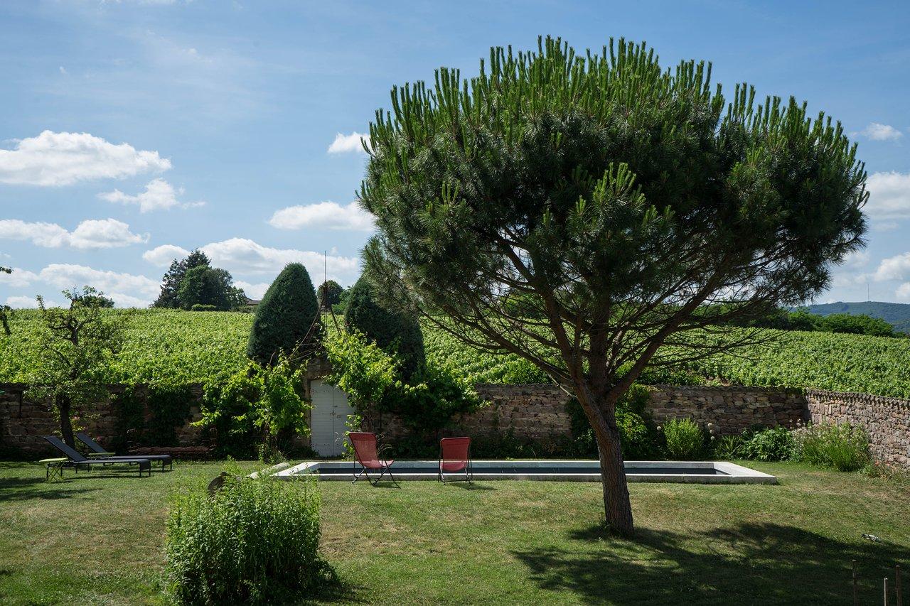 jardin avec piscine et
