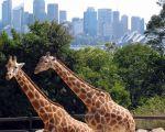 37 Unique Jardin Zoologique Lisbonne