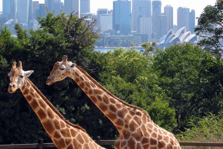 Jardin Zoologique Lisbonne Best Of Parc Zoologique — Wikipédia