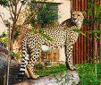 Jardin Zoologique Lisbonne Inspirant File Zoo De Lisboa by Juntas 73 Wikimedia Mons