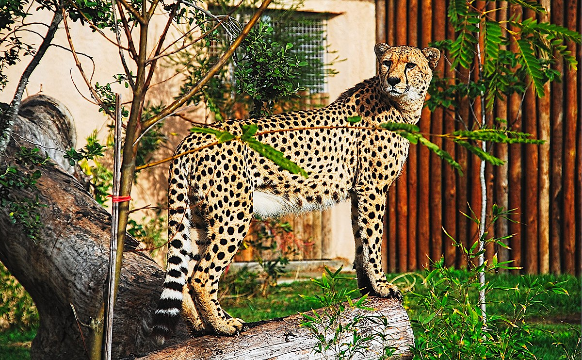 1200px Zoo de Lisboa by Juntas 73