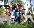 Jardin Zoologique Lisbonne Luxe Lisbon Zoo