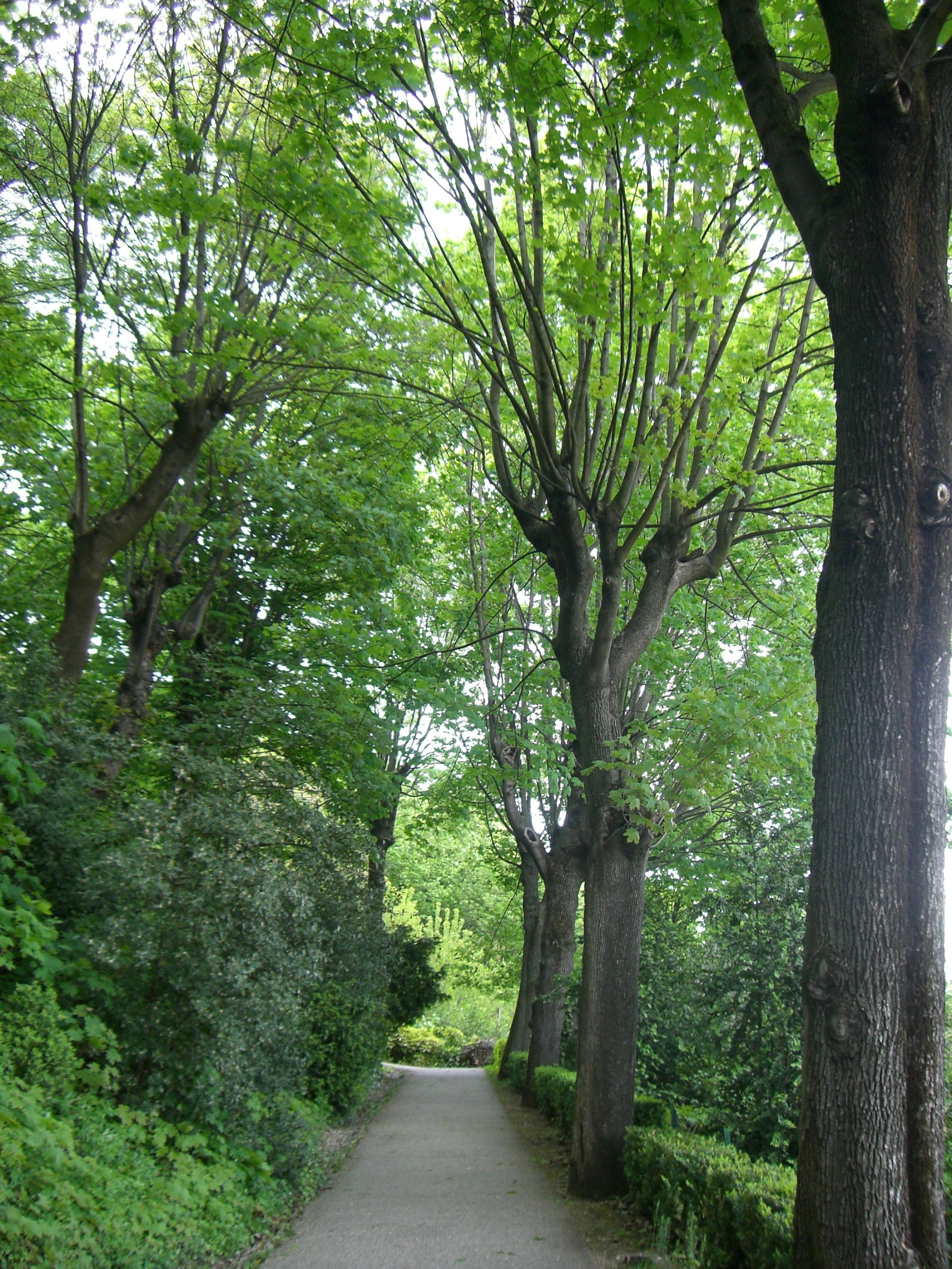 Lyon 5 Parc des Hauteurs Jardin du Rosaire Une allée au printemps 2008 JPG