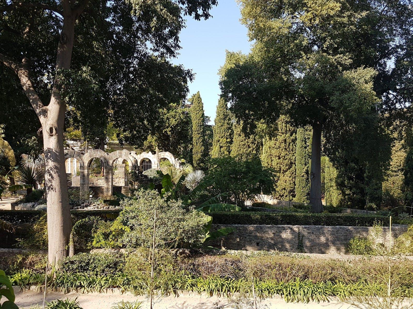 jardin des plantes de montpellier JPEG