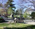 Le Jardin Des Plantes Montpellier Best Of Reportage Montpellier Les Parcs Et Jardins  Ne Pas