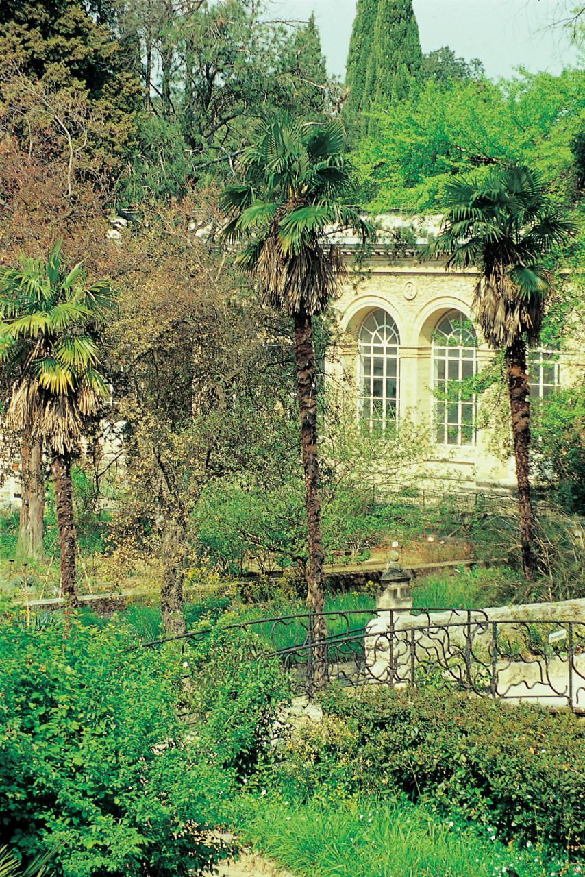 montpellier jardin des plantes de montpellier