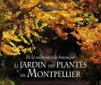Le Jardin Des Plantes Montpellier Frais Le Jardin Des Plantes De Montpellier
