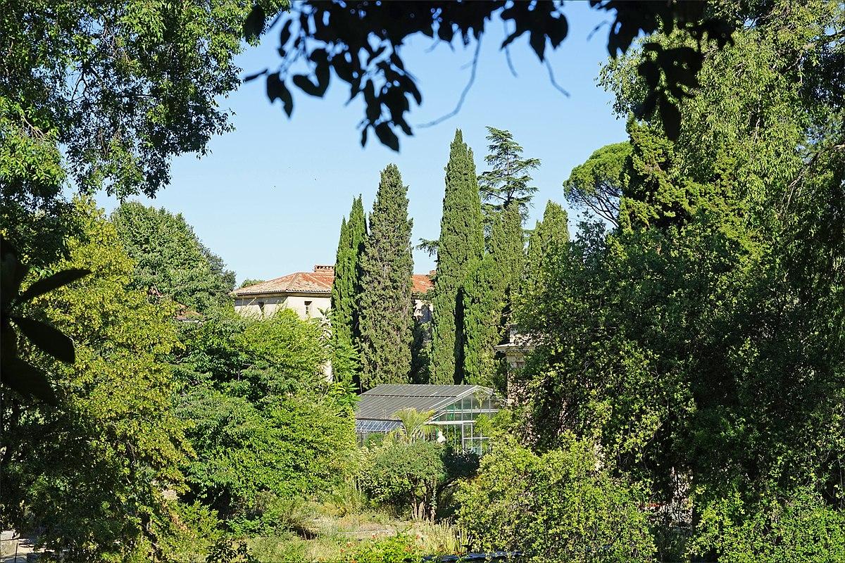 1200px Le jardin des plantes Montpellier %